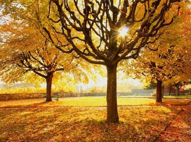 Резултат с изображение за ноември