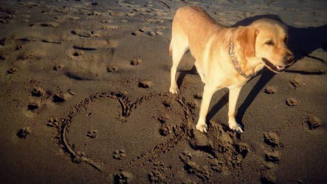 Ден на кучето